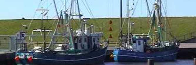 Fischkutter im Hafen von Meldorf